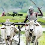 APCBS Portal Second List of Crop and Gold Loan - Runa Maafi Scheme 2015