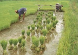 crop loan scheme